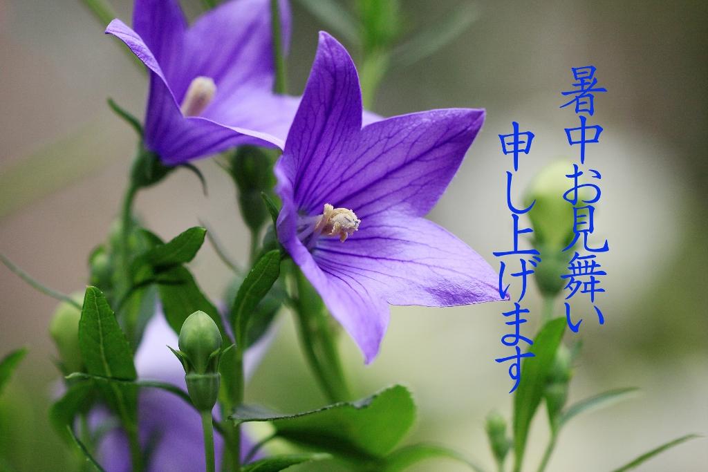 Memai_1024x683